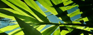Leaves in the sun, photosynthesis, energy efficiency