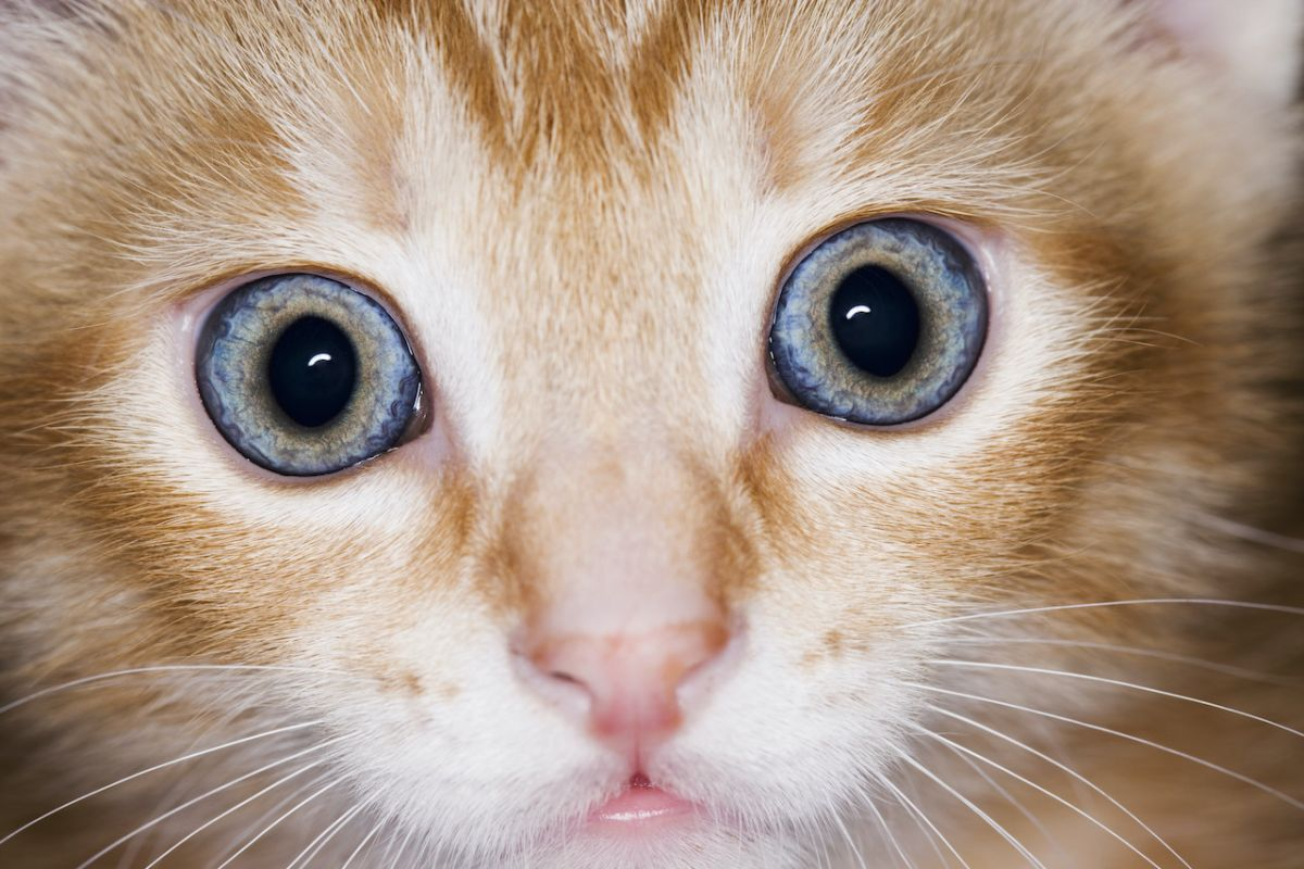 What happens if a far more lethal coronavirus emerges in pets?
