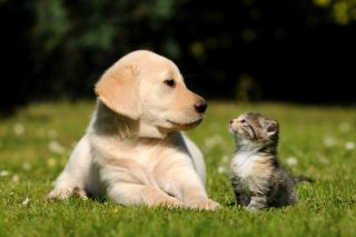 A kitten and puppy outside in spring.