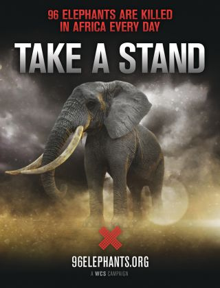 WCS's 96 Elephants campaign, conservation
