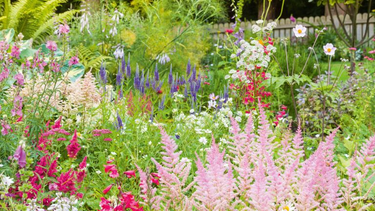 Flowers in a cottage garden