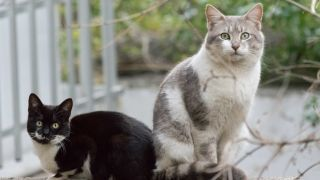 Signs your cat is in heat - two cats sat outside together