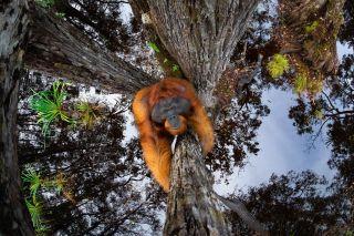Thomas Vijayan / Nature TTL