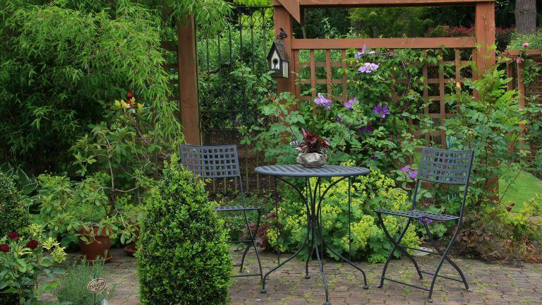 evergreens in a garden