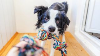 best dog toys to entertain your pooch