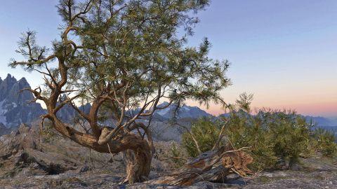 Scrubby tree