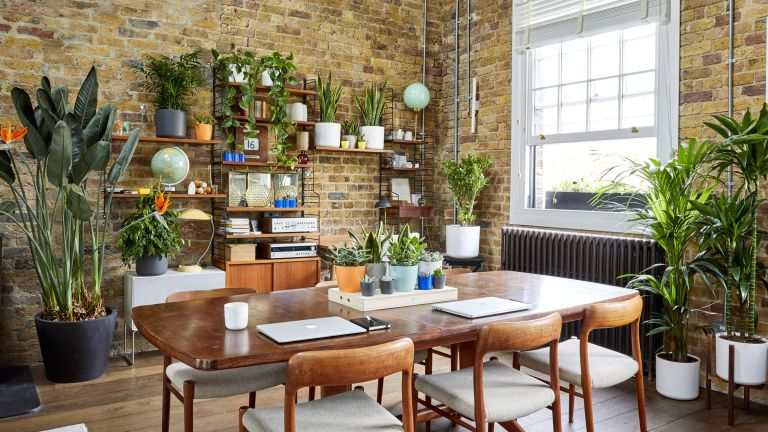 house plant prices post brexit
