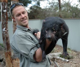 Healthy Tasmanian Devil with Zoo Keeper