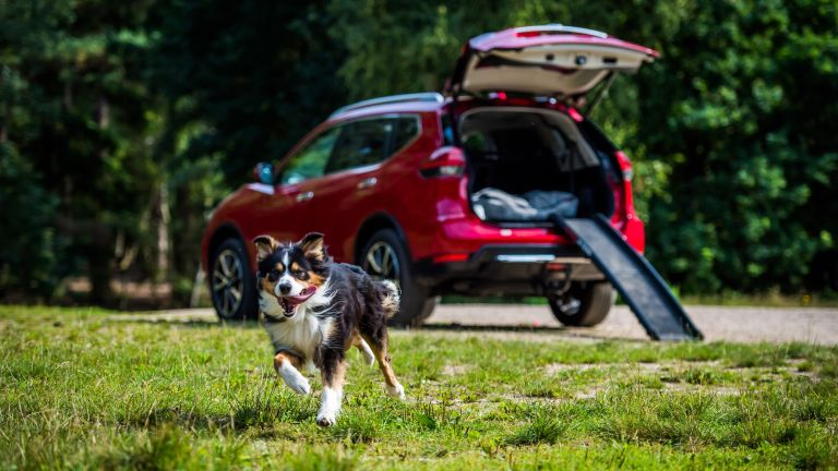 Nissan X Trail For Dogs >> Nissan S Paw Pack Is The Ultimate Car Accessory For Dog
