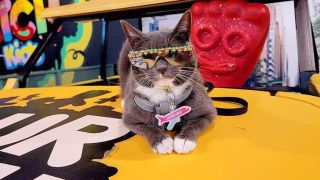 sunglass cat will be at catfest in london
