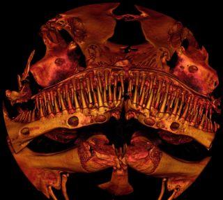 a tiny toothy catfish called Kryptoglanis shajii