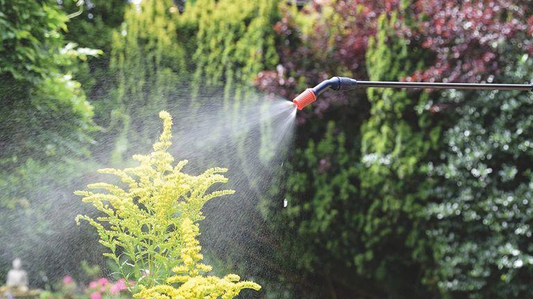 Spear and Jackson Pump Action Pressure Sprayer hose spraying in garden