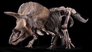 """Big John"" was discovered in 2014 in South Dakota."