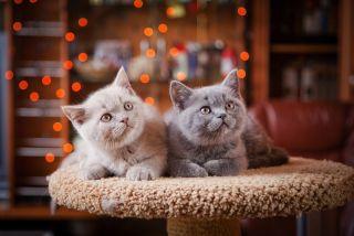 kittens on cat tree