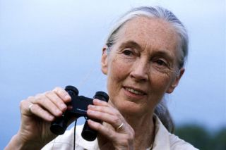 jane goodall biography, chimpanzees