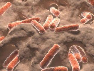 gut microbes