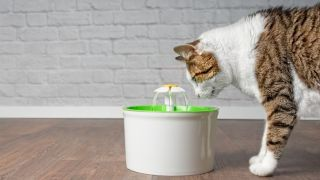 A white cat drinking from the best pet water fountains