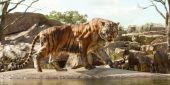 A Zookeeper Was Killed In A Freak Tiger Accident