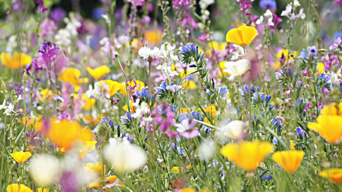 Beekeepers reveal easy ways to attract bees to your garden this World Bee Day