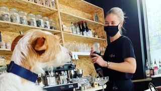 Cocktails for dogs at dog cocktail bar london