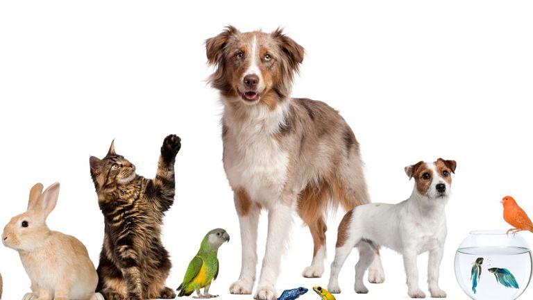 Celebrity pets: Line up of pets