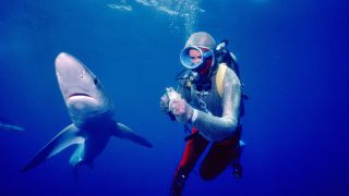 Playing With Sharks Valerie Taylor