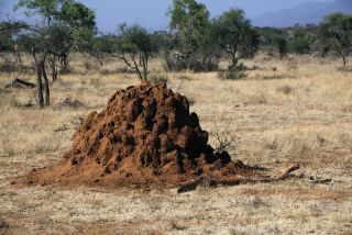 Termite Mound in Africa