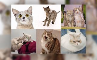 AI Sucks at Making Adorable Cat Photos, Clearly Misses the