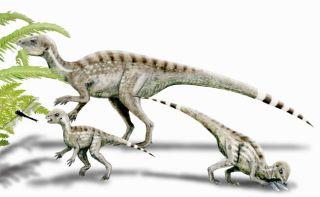 dinosaurs, lifespan