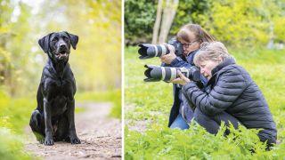 Pet Dog Puppy Photography