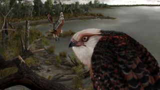illustration shows a close up of the newly identified eagle Archaehierax sylvestris next to a lake, with an eagle of the same species flying in the background