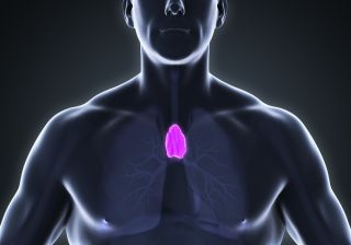 Thymus: Facts, Function & Diseases | Live Science