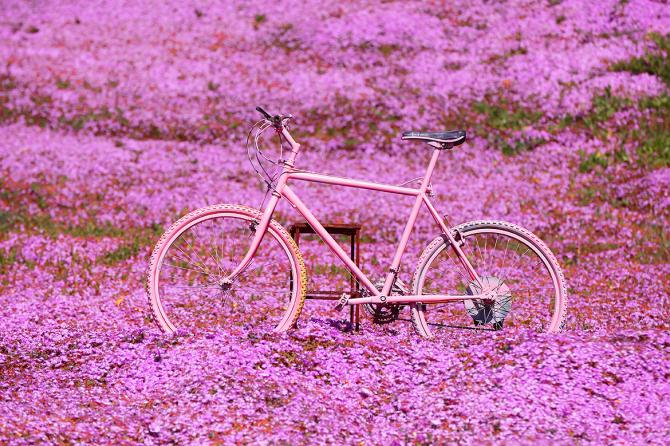 A sea of pink in Sardinia