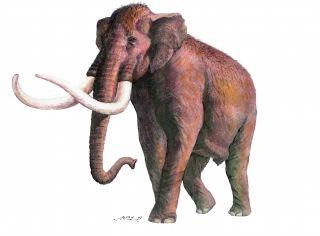 primitive mammoth