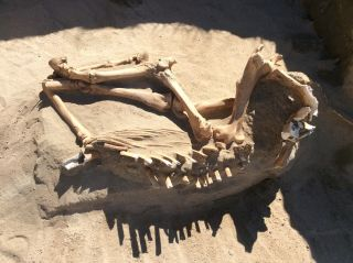 Ice age horse 4