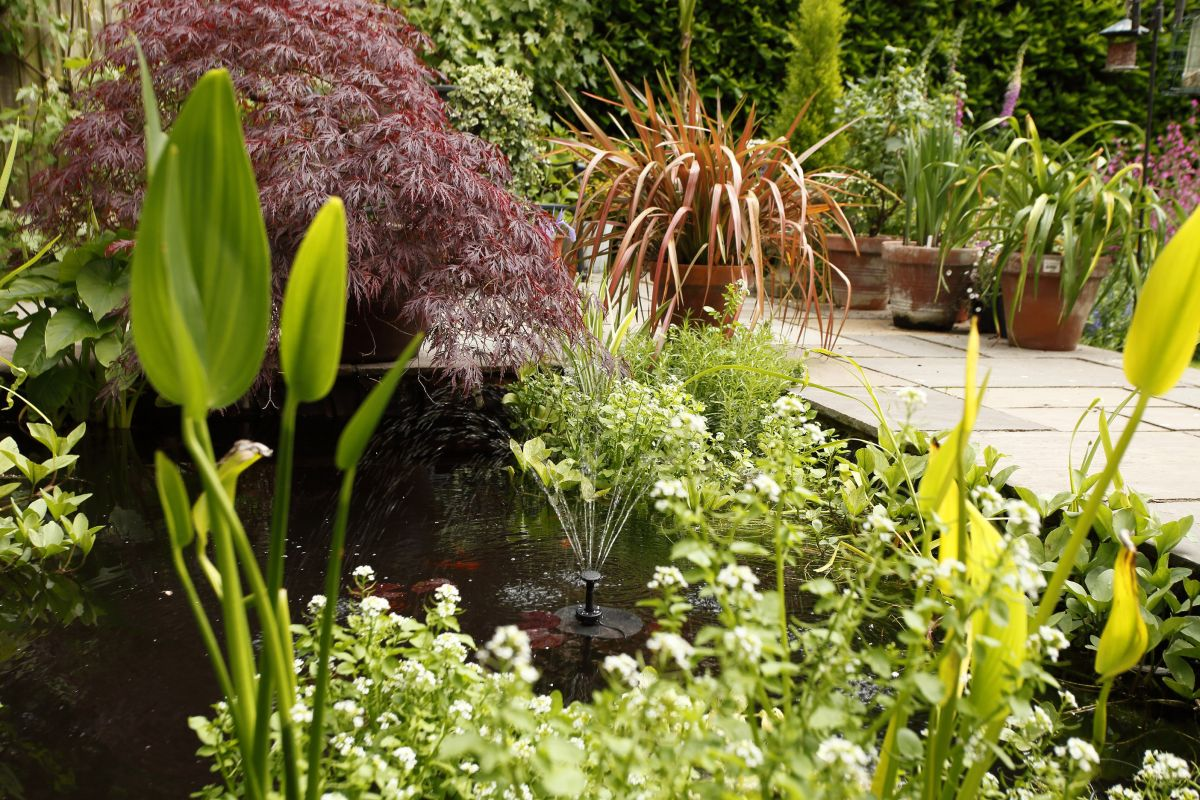 How to build a garden pond: follow our step-by-step guide