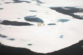arctic habitats, environment