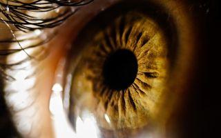 eyesight, eyes, biomechanics