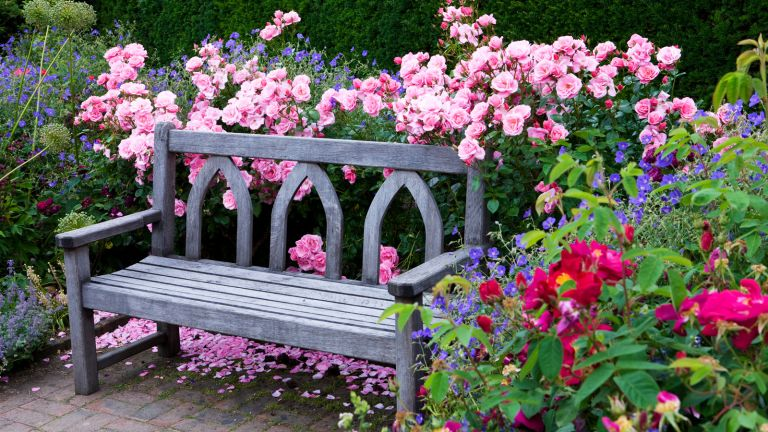 bench surrounded by flowers
