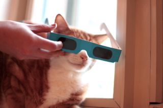 Cat with solar eclipse viewers