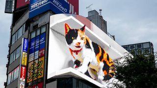 3D cat billboard