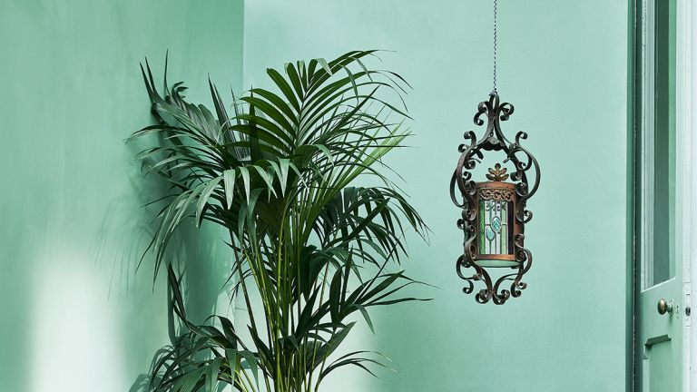 Color psychologist discusses color in lockdown, plant in turquoise painted room, green paint photo