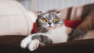 2020's Funniest cat videos