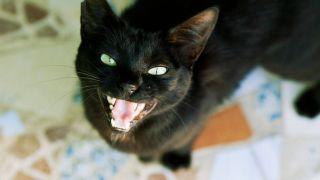 cat meowing at night