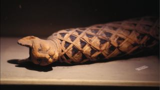 A mummified cat from ancient Egypt.