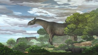 An illustration of Paraceratherium linxiaense chomping down on vegetation on what is now the northeastern Tibetan Plateau about 26.5 million years ago, during the late Oligocene epoch.