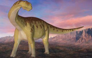 dinosaur-camarasaur-100514-02