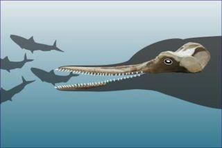 extinct dolphin