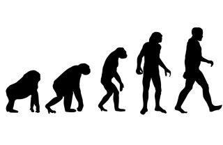 Humans evolved from four-legged apes that spent time in trees to walking upright.