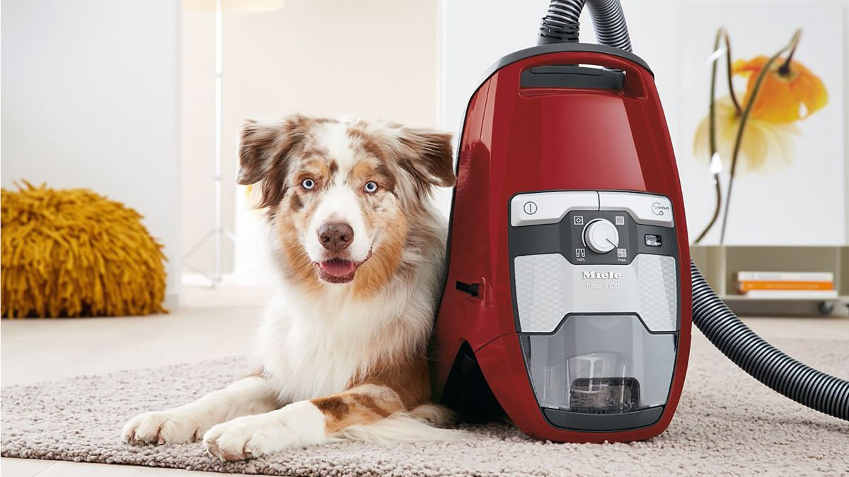 Best Vacuum Cleaner 2020 Bagless And